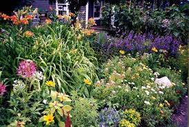 enjoying the beautiful perennial flowers in your frontyard or
