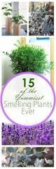 best 25 indoor gardening ideas on pinterest water plants