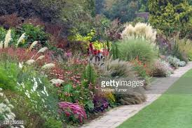 ornamental grasses on balcony garden stock photo getty images