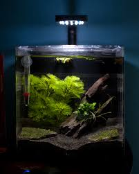 Aqueon Led Light 4 Gallon Tank Oceanic Systems Inc Evolve 4 Led Light Aquarium