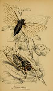 49 best bug art images on pinterest insect art beetles and bug art