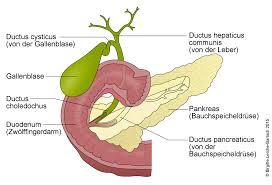 bauchspeicheldrüsenschwäche symptome ct der bauchspeicheldrüse deximed