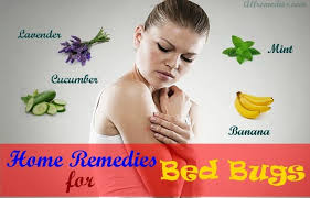 remedies for bed bug bites 19 natural home remedies for bed bugs bites