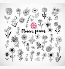 a flower sketch royalty free vector image vectorstock