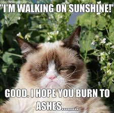 Angry Meme Cat - 26 funny angry cat memes for any occasion freemake grumpy cat