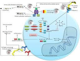 b b mycose si ge candida albicans biology molecular characterization