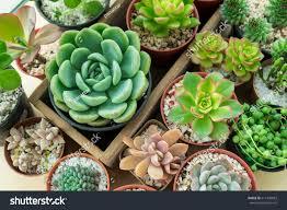 Succulent Plant Top View Various Types Succulent Plant Stock Photo 611449853