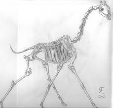 giraffe skeleton sketch by wetrider on deviantart