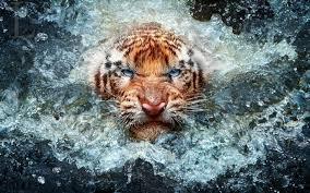 wildlife desktop wallpaper