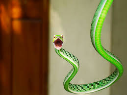Meaning Of A Dream About Snakes, Seekyt