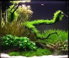 Aquascape Design Aquascape Mini Style Design Inspired Home Design Ideas And