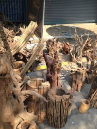 drift wood for sale at jj market picture of chatuchak flower