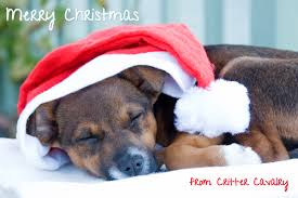 pet christmas pet photos make great christmas cards photography and more