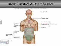 Human Anatomy And Physiology Terminology Body Organization Youtube