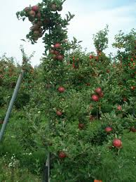 plants native to arkansas food plot u0026 fruit trees