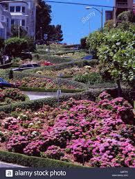 San Francisco Flower Garden by Hydrangea Lombard Street Cable Car San Francisco United Stat Sky