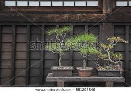 small potted trees sit on bench stock photo 551293846