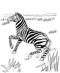 printable zebra coloring pages coloring me