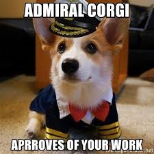 Corgi Puppy Meme - corgi puppies corgi rescue and adoption near you