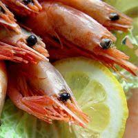 comment cuisiner les crevettes congel馥s comment faire cuire des crevettes congelées bouillies rowland98 com