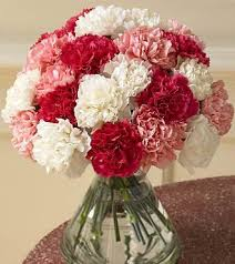 carnation bouquet anniversary carnation parents carnation 24pcs of carnation