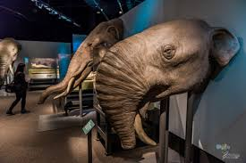 u0027s preserved woolly mammoth victoria