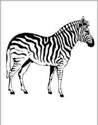 coloring pages of a zebra funny zebra coloring pages u2013 color for