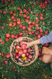 Vermont where to travel in november images Apple picking in vermont gal meets glam jpg