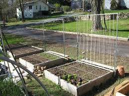 Trellis On Layout Of Garden Trellis For Peas And Beans Beans On The