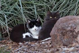 Keep Cats In Backyard Feral Kittens Picky About Backyard Shelter