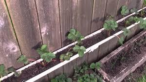 Eco Friendly Garden Ideas Strawberry Gutter Planter Plus Garden Update