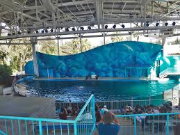 Six Flags Dolphin Swim Theme Park Overload Six Flags Discovery Kingdom Summer Photo Trip