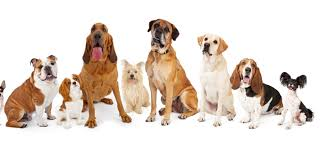 rare breeds of dogs you for animal
