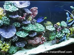 120 gallon saltwater fish only aquarium with artificial corals