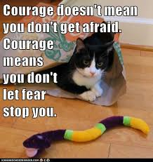 Fear Meme - growth mindset memes english courage doesn t mean you don t get