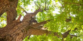 home integrity tree services