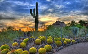 mesa desert landscape design az landscape creations
