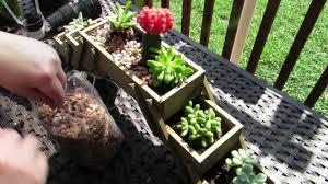 how to plant an indoor succulent garden youtube