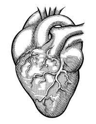 vector human heart royalty free cliparts vectors and stock