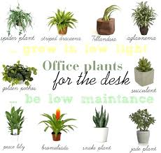 Indoor Fragrant Plants - desk plants for office desk as per vastu best plants for office