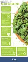 microgreens top 10 micgrogreens u0026 how to grow them dr axe
