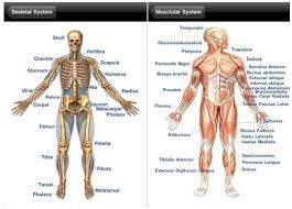 Human Anatomy Full Body Picture Human Body Full Parts Inside Human Anatomy Chart
