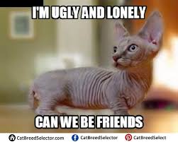 Cat Pic Meme - hairless cat memes cat breed selector