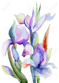 iris flowers iris flowers watercolor illustration stock photo picture and