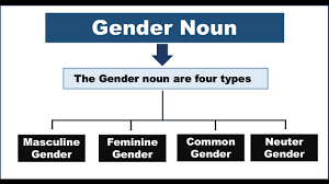 what is gender noun gender noun definition youtube