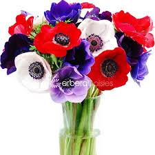 bulk flowers bulk flowers mixed colors anemones