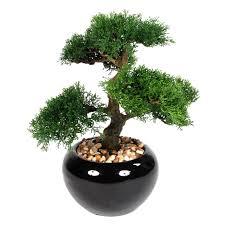 bonsai tree in ceramic pot 15 in at home at home