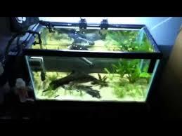 10 gallon planted tank led lighting wavepoint led on 10 gallon aquarium youtube