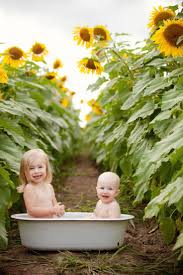 Grinter Farms 40 Best Sunflower Photos Images On Pinterest Sunflower Fields