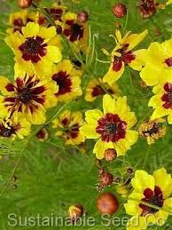 12 Best Annual Flowers For by 45 Best Waterwise Xeriscape Annuals Images On Pinterest Cut